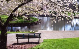 park-bench-under-magnolia-tree-1019649-m