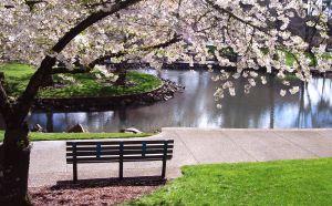 park-bench-under-magnolia-tree-1019649-m