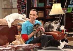 bazinga-cats-jim-parssons-sheldon-sheldon-cooper-tbbt-Favim.com-41452_large